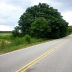 Swansea, Lexington County, South Carolina Farms and Ranches