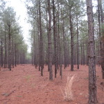 Chesterfield County, South Carolina Timber Land For Sale - 98 Acres